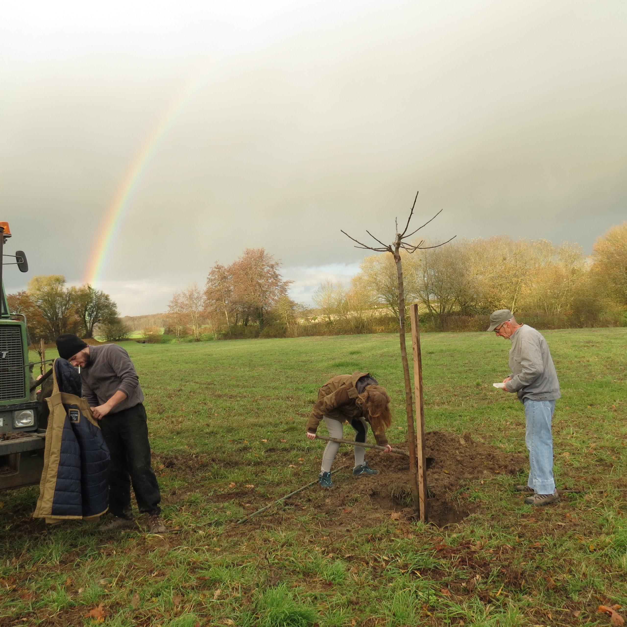 Plantation d'un arbre